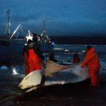 Fishing whale