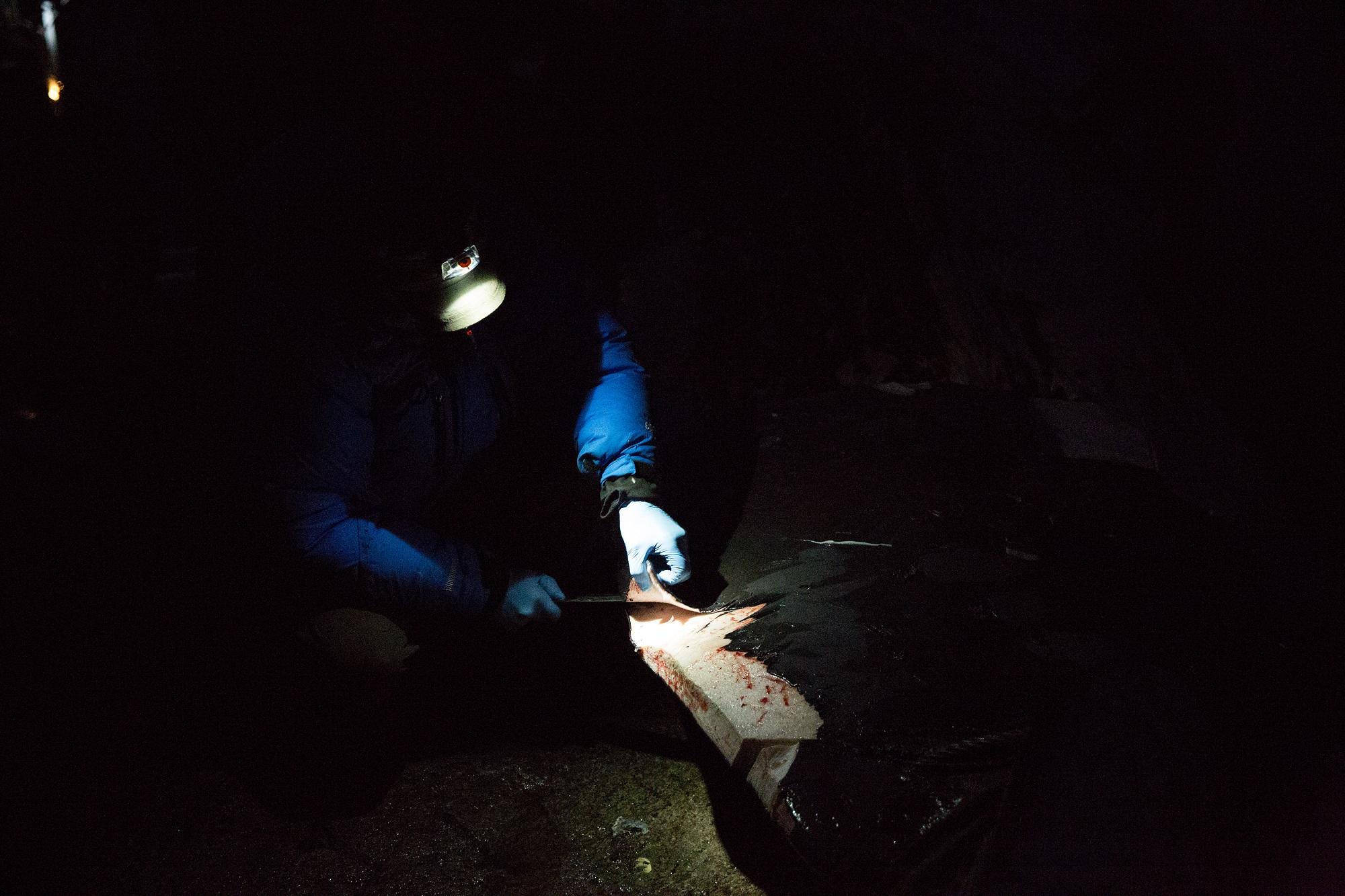 Cutting whale
